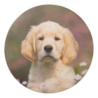 Cute Golden Retriever Dog Puppy Face Animal Photo Eraser