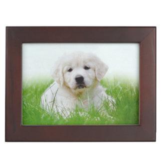 Cute Golden Retriever Puppy Dog Green Grass Keepsake Box