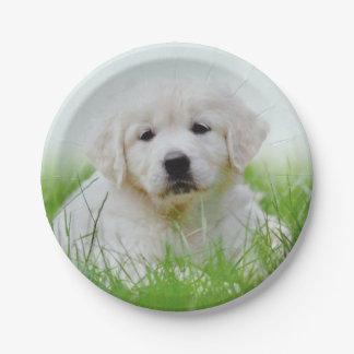 Cute Golden Retriever Puppy Dog Green Grass Paper Plate