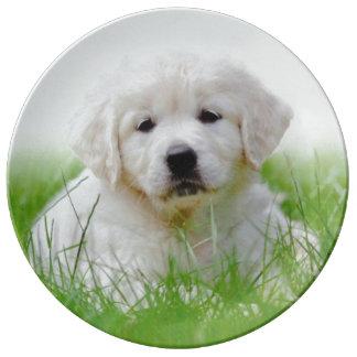 Cute Golden Retriever Puppy Dog Green Grass Plate