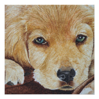 cute golden retriever puppy dog portrait art poster