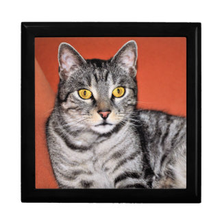 Cute Gray Cat Portrait Gift Box