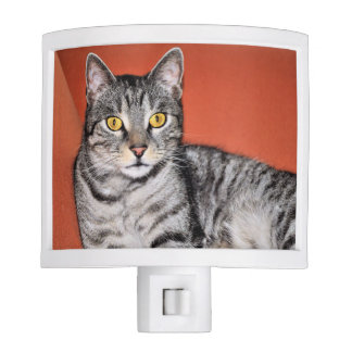 Cute Gray Cat Portrait Night Lites