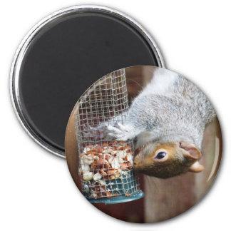 Cute Gray Squirrel Magnet