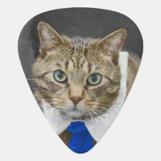 Cute green-eyed brown tabby cat wearing a blue tie guitar pick