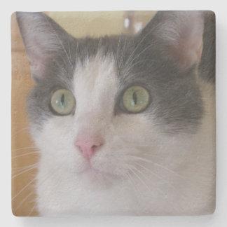 Cute Grey and White Cat Stone Coaster