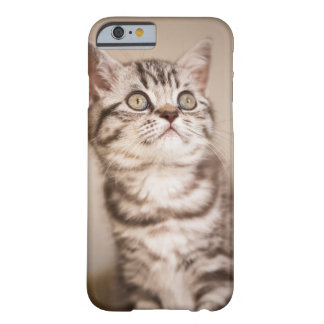 Cute Grey British Short Hair Kitten (Blue Tabby) Barely There iPhone 6 Case