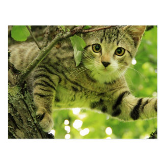 Cute grey cat in a tree postcard