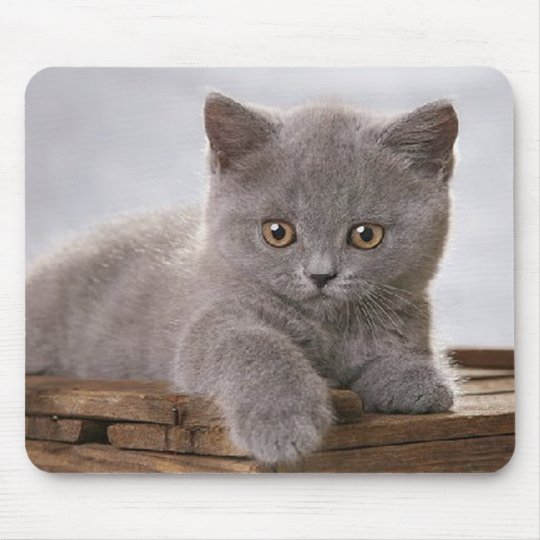 cute grey kitten mousepad