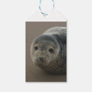 Cute grey seal pup baby on sandy beach pack of gift tags