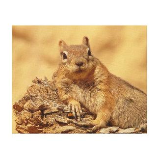 Cute Ground Squirrel Canvas Print