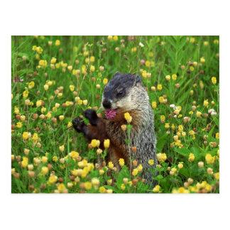 Cute Groundhog with Flower Postcard