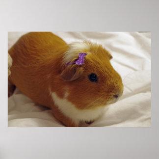 cute guinea pig poster