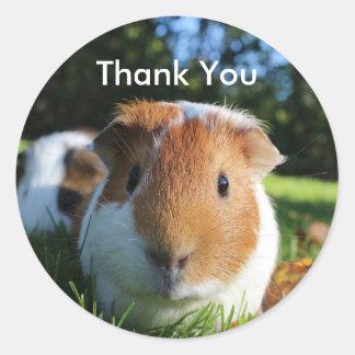Cute Guinea Pig Thank You Classic Round Sticker