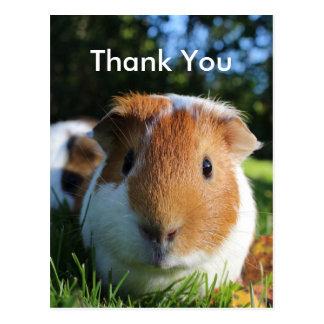 Cute Guinea Pig Thank You Postcard