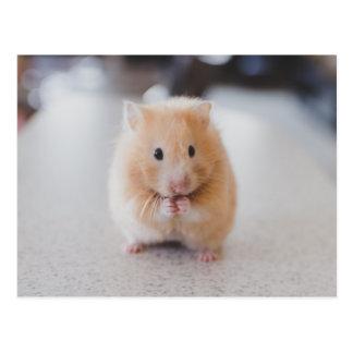 Cute hamster postcard