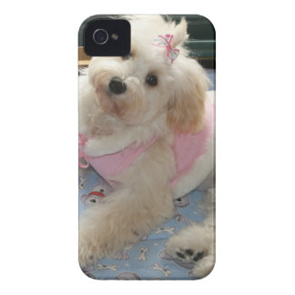 Cute Havanese Puppy iPhone 4 Case