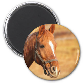 CUTE HORSE 2 INCH ROUND MAGNET