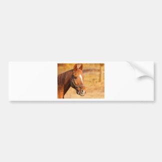 CUTE HORSE BUMPER STICKER