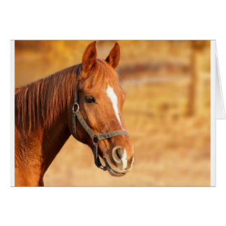 CUTE HORSE CARD
