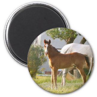 CUTE HORSE FOAL AND MARE 2 INCH ROUND MAGNET