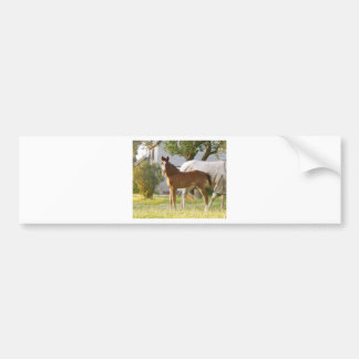 CUTE HORSE FOAL AND MARE BUMPER STICKER