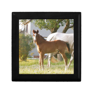 CUTE HORSE FOAL AND MARE KEEPSAKE BOXES