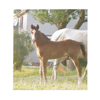 CUTE HORSE FOAL AND MARE NOTEPADS