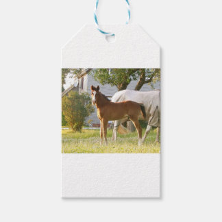 CUTE HORSE FOAL AND MARE PACK OF GIFT TAGS