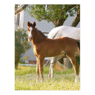 CUTE HORSE FOAL AND MARE POSTCARD
