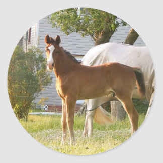 CUTE HORSE FOAL AND MARE ROUND STICKER