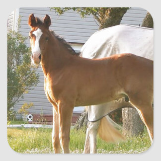 CUTE HORSE FOAL AND MARE SQUARE STICKER