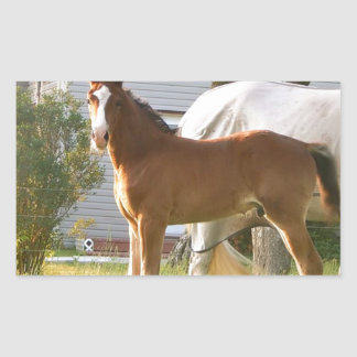 CUTE HORSE FOAL AND MARE STICKER
