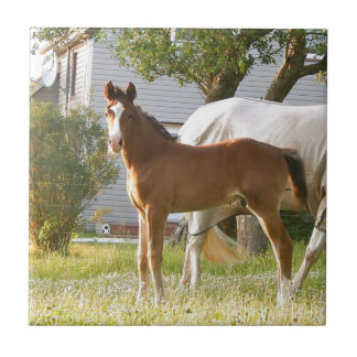 CUTE HORSE FOAL AND MARE TILE
