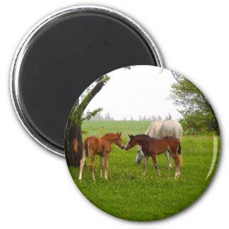 CUTE HORSE FOALS 2 INCH ROUND MAGNET