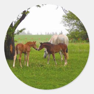 CUTE HORSE FOALS CLASSIC ROUND STICKER