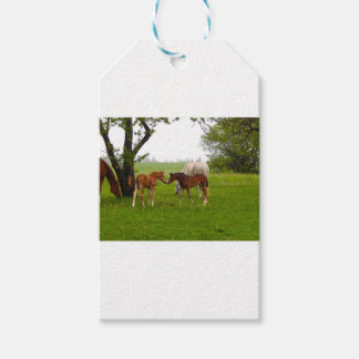 CUTE HORSE FOALS GIFT TAGS