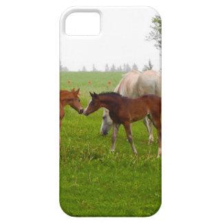 CUTE HORSE FOALS iPhone 5 CASE