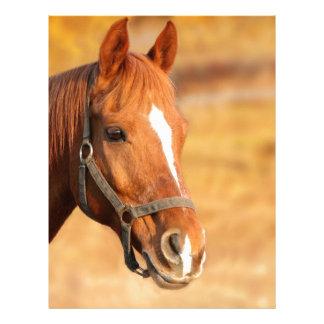 CUTE HORSE LETTERHEAD