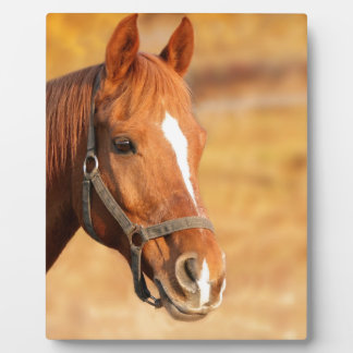 CUTE HORSE PLAQUE