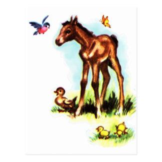 Cute Horse Pony Baby Foal Postcard