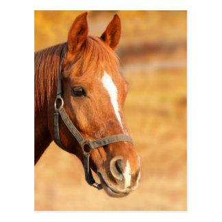 CUTE HORSE POSTCARD