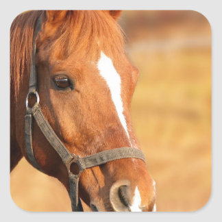 CUTE HORSE SQUARE STICKER