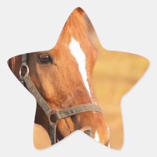 CUTE HORSE STAR STICKER