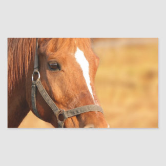 CUTE HORSE STICKER