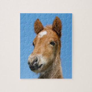 Cute Icelandic Horse Foal Pony Head Front Photo Jigsaw Puzzle