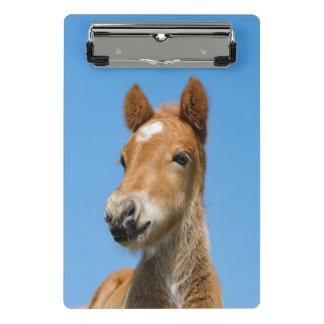 "Cute Icelandic Horse Foal Pony Head Front Photo -"" Mini Clipboard"