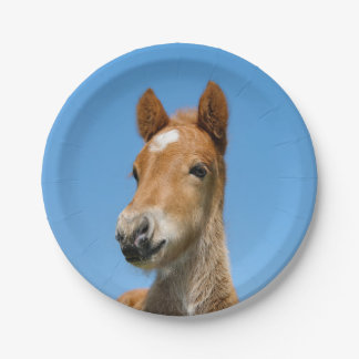 Cute Icelandic Horse Foal Pony Head Front Photo ,- Paper Plate