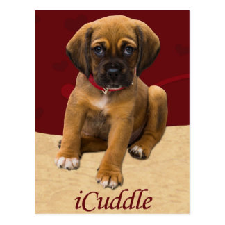 Cute iCuddle Puppy Dog Postcard