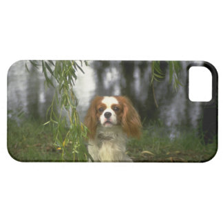 Cute iPhone 5 Cases Beautiful King Charles Spaniel